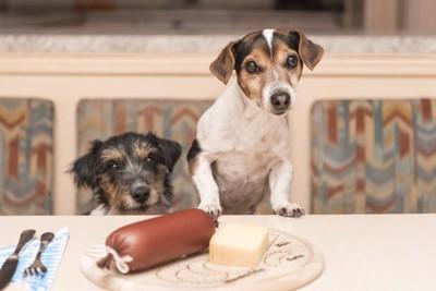 食卓と犬たち