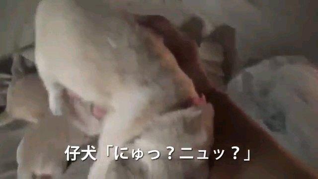 にゅ?~字幕