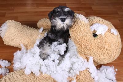 ぬいぐるみの中綿を取り出した犬