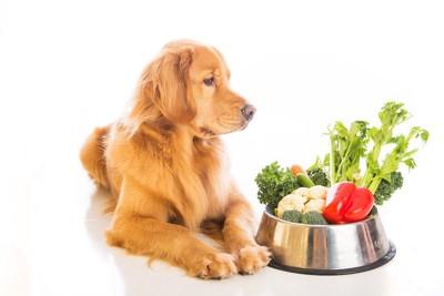 野菜の入ったフードボウルを見る犬