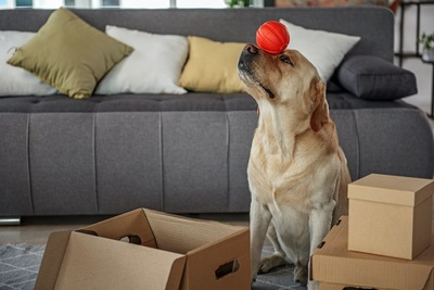 ボールをおでこに乗せて座る犬