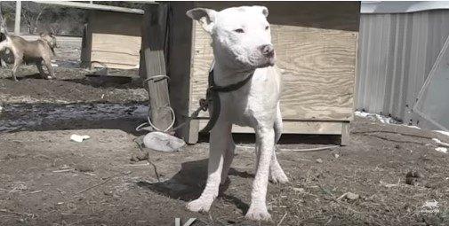 犬小屋の前に立つ犬