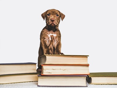 本に手をかけて立つ仔犬
