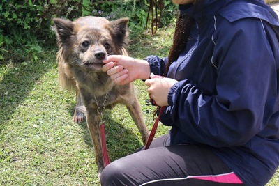リードをつけて訓練を受ける保護犬