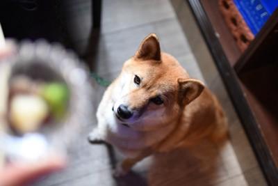 お座りして待つ犬