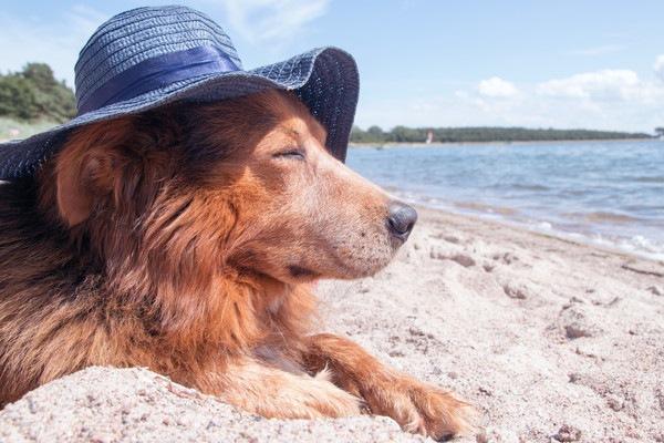 帽子をかぶる犬