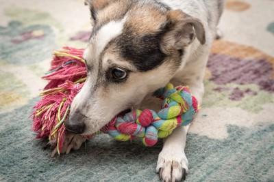 大切なロープと犬
