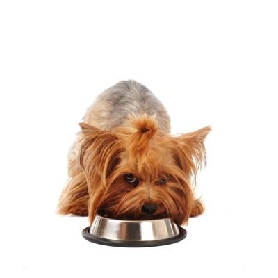 餌を守る犬
