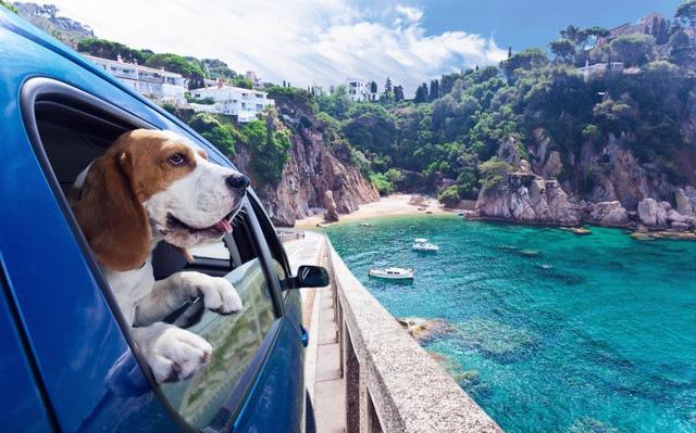 車から外を眺めている犬