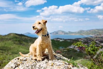 岩に上る犬