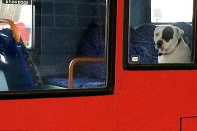 バスの中から外を見ている犬