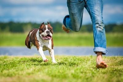 飼い主と走る犬