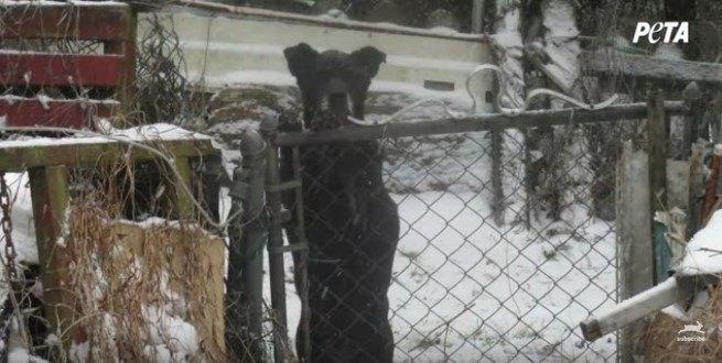フェンスの中で立ち上がる犬