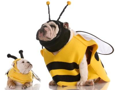 蜂のコスプレをしている犬の親子