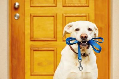 ドアの前リードを咥えている犬
