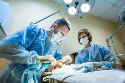 手術をしている獣医師