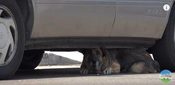 車の下からのぞく犬