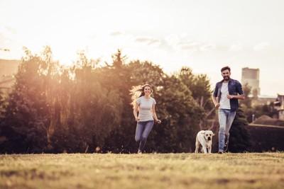 一緒に走る犬