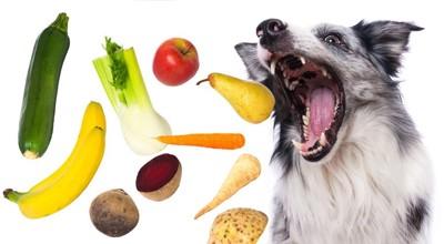 たくさんの野菜を食べようとしている犬