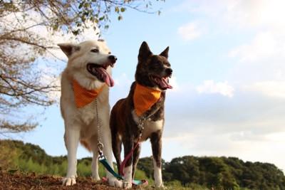 並ぶ2頭の犬