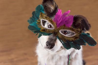 仮面を付けている犬
