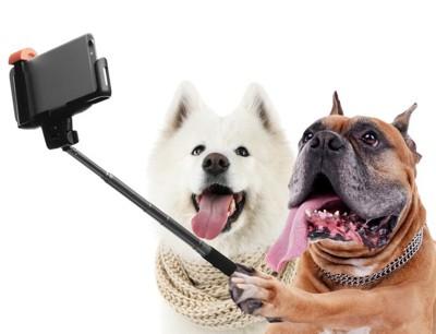 犬とセルフィー