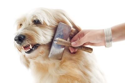 ブラッシングを嫌がっている犬