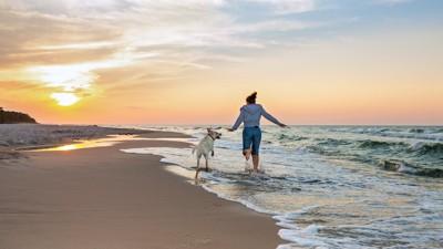 海辺を飼い主と一緒に走る犬