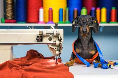 裁縫をする犬