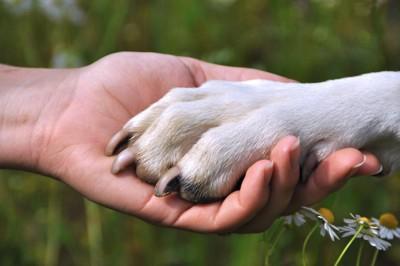 女性の手に乗せた犬の足