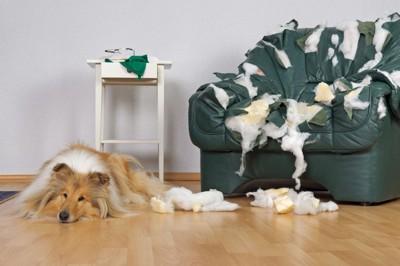 ボロボロのソファーの横に犬