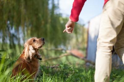 散歩中に指示を出す人と犬