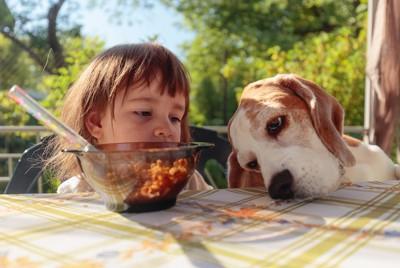 テーブルの上を見つめる犬と見守る女の子