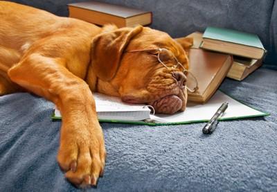 勉強中に寝てしまった犬 16302870