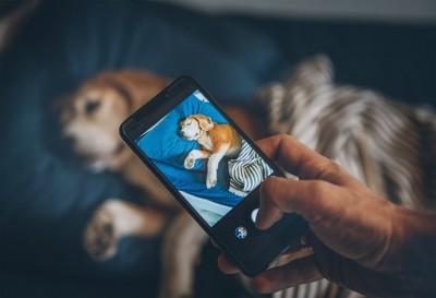 寝ている犬を撮影している飼い主