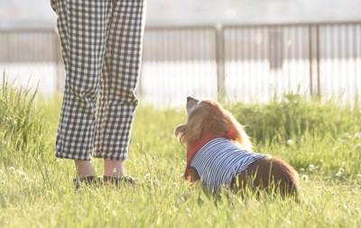 飼い主を前にして座って見上げている犬