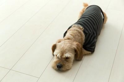 リビングの床に伏せる服を着た犬