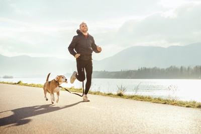 散歩中に一緒に走る犬と男性