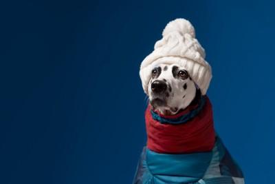 ニット帽をかぶって防寒着を着ている犬