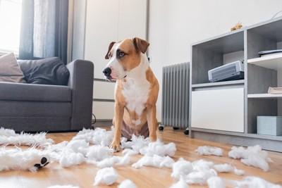 綿が散乱した部屋と犬