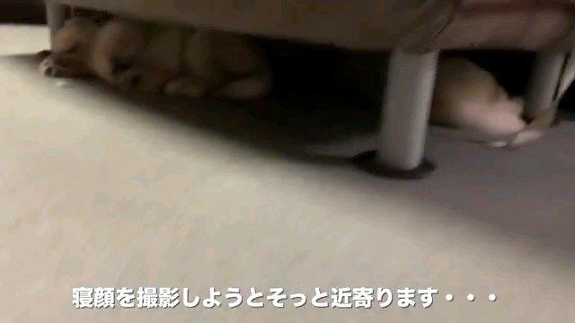寝顔を~字幕