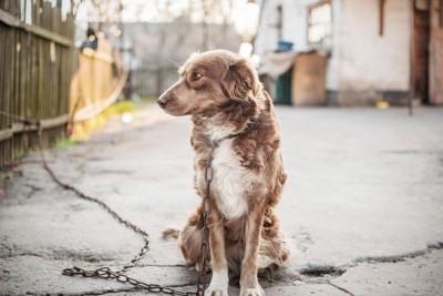 目をそらし座っている犬