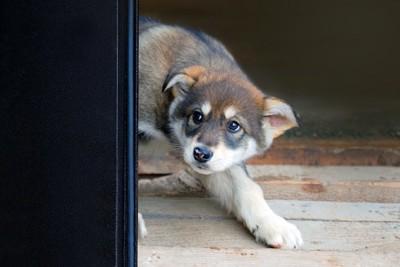 隠れて怖がっている犬