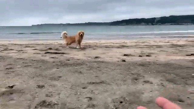 カメラみる犬と人の手