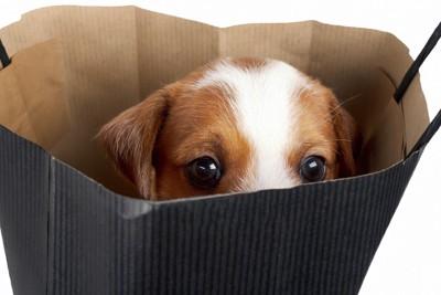 紙袋の中から覗く犬