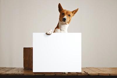 白紙のボードに手を掛ける犬