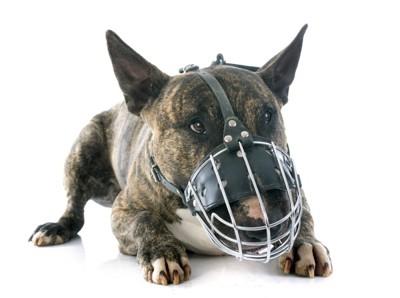 ワイヤー型の口輪を付けている犬