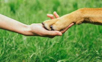 握手する人と犬の手