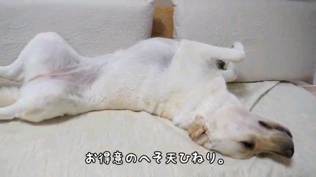 お得意の~字幕