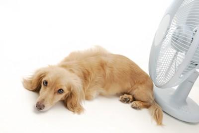 扇風機の前で横になる犬